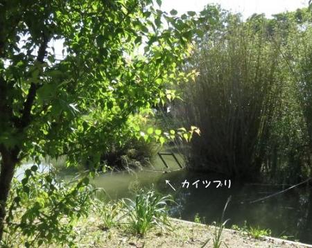石丸山公園 073