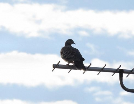 朝の野鳥 015