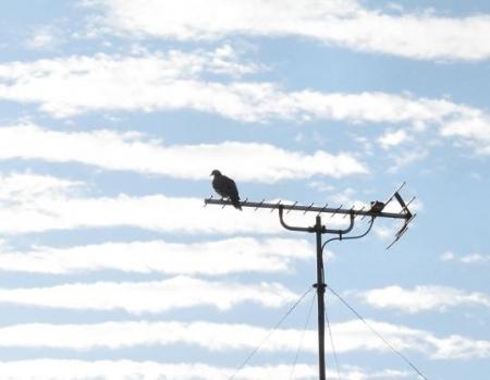 朝の野鳥 013