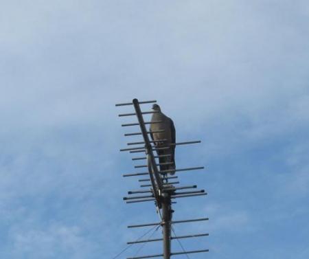 朝の野鳥 022