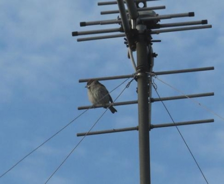 朝の野鳥 019