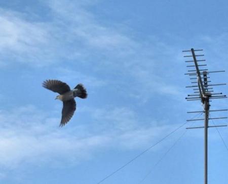 朝の野鳥 031