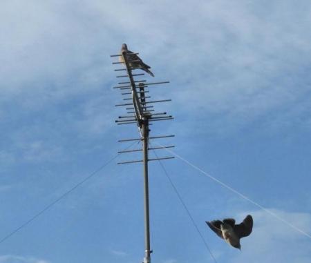 朝の野鳥 025