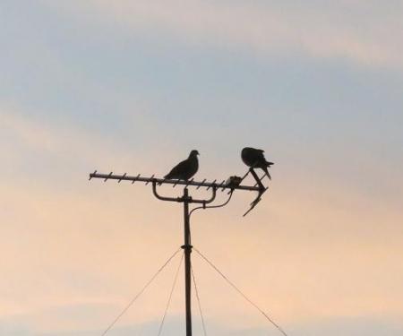朝鳥 012