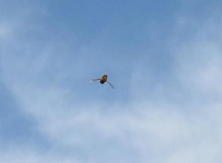 清水とスズメの飛び立ち 021