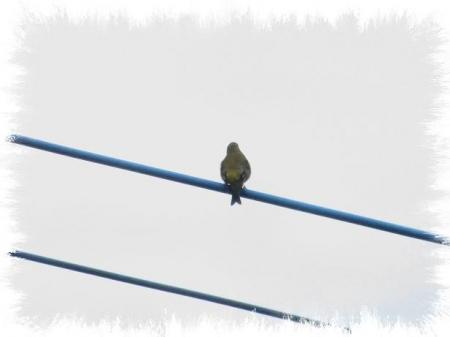 朝の野鳥 049