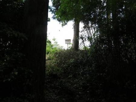 探鳥会 星野村お茶祭り 253
