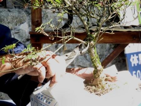 探鳥会 星野村お茶祭り 077
