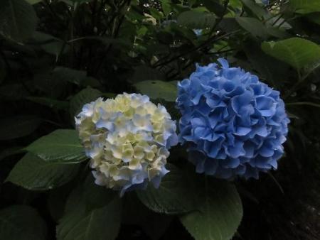 清水山 021