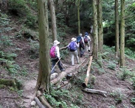 金立山に登る 104
