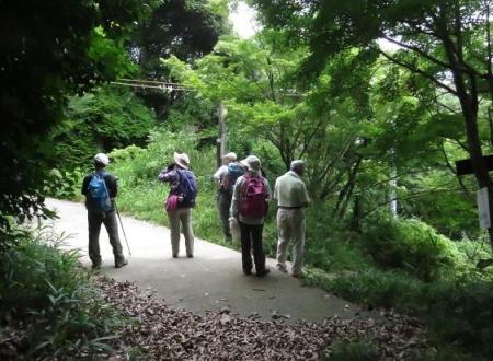 金立山に登る 253