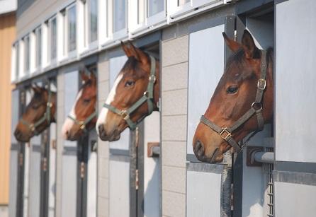 5・馴致・牡馬たち