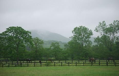 6・歯・雨の放牧地