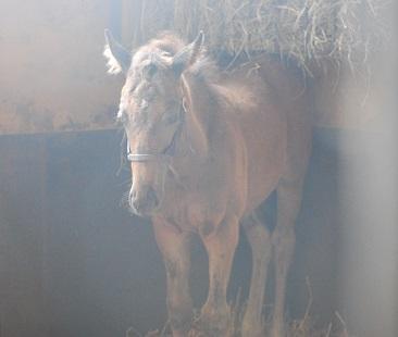 6・シル・馬房のノヴェ