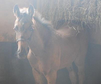 6・シル・馬房のノヴェ2
