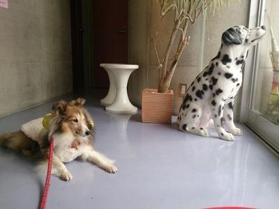 2 10 ぱっきん看板犬気分