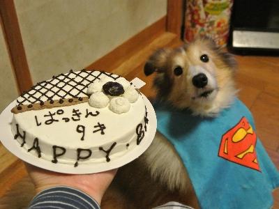 ケーキガン見