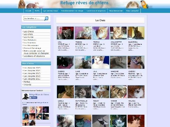 犬猫養子縁組サイト