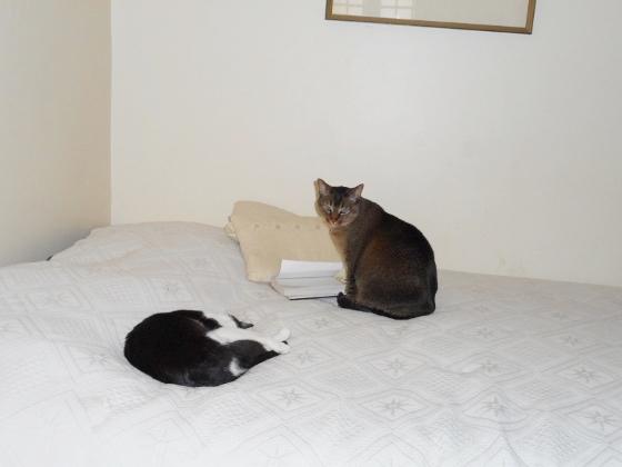 リュリュとタマ