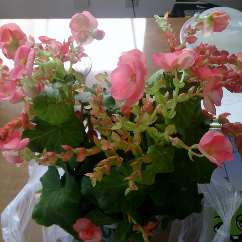 2015-05-29-14-46-58_photo (800x800)