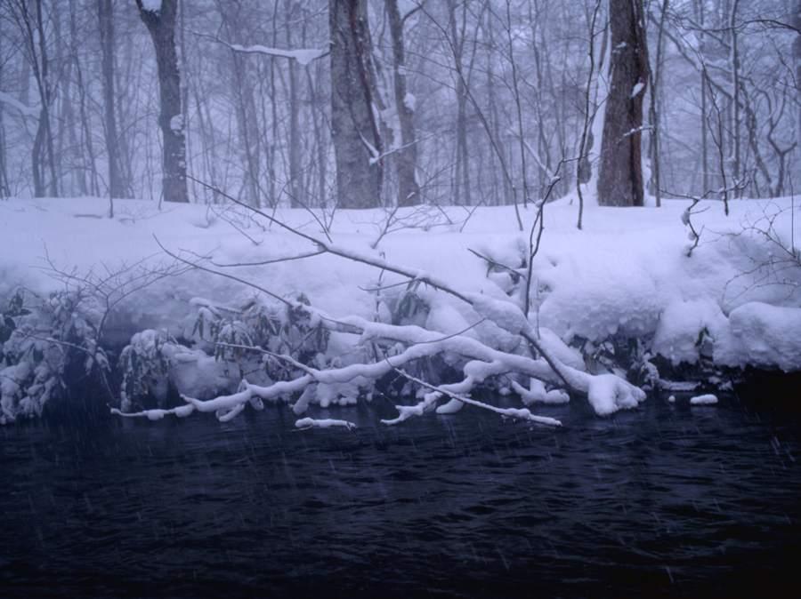 冬の追良瀬渓流11992b