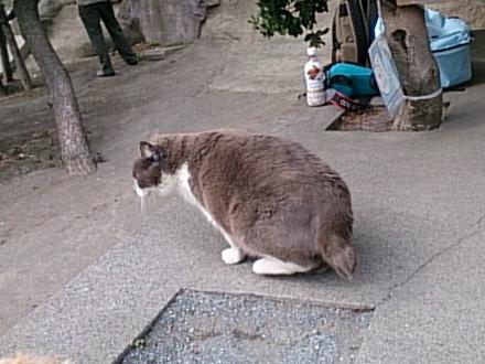 江ノ島1505140034