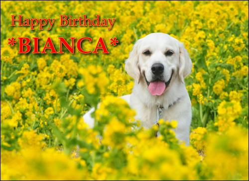 2015年3月15日ビアンカ誕生日