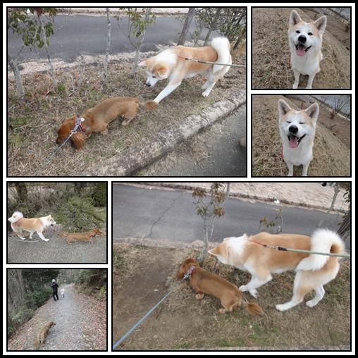 cats-1_201502082120532fd.jpg