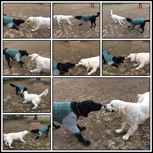 cats-2_20150117000458b6a.jpg