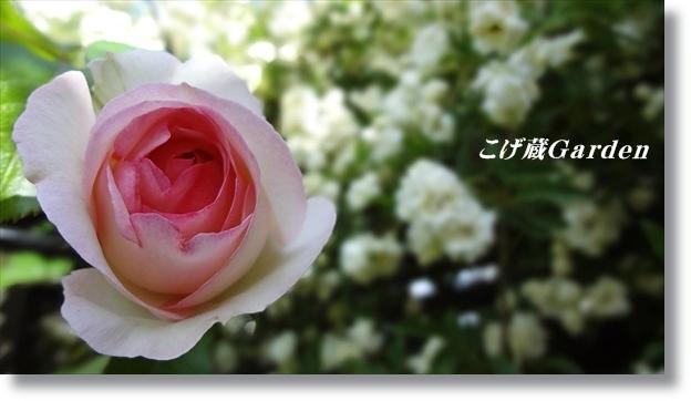 DSC04524_R.jpg