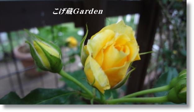 DSC06216_p.jpg