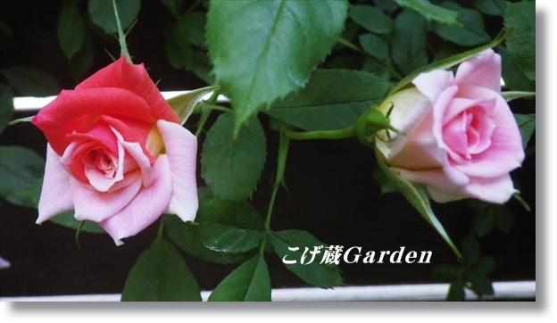 IMGP2992_R.jpg