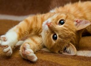 trusting-glance-kitten-sweet-3220-1280x938.jpg