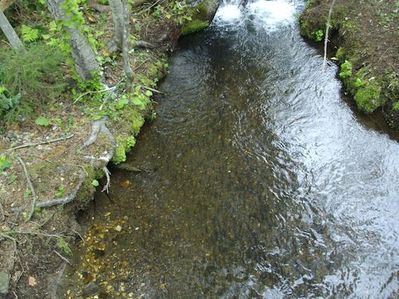 屈斜路湖流れ込み