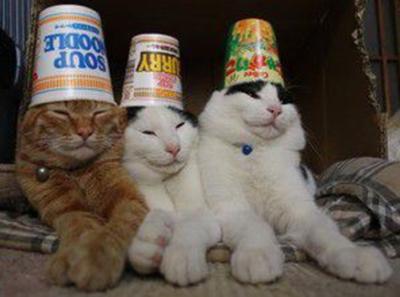 飲み過ぎて昨夜は大虎だった三人が正気を取り戻した
