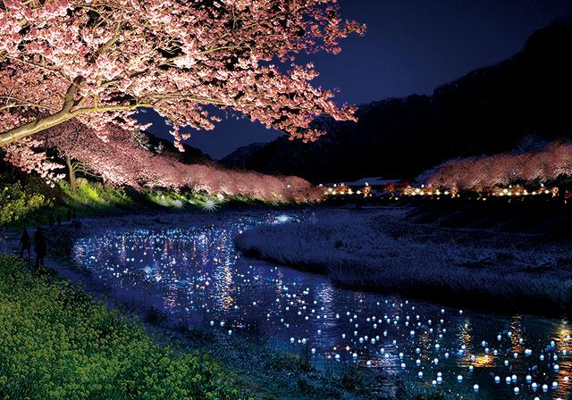 河津桜 夜桜流れ星