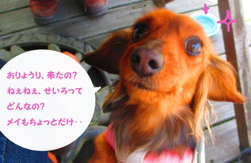 2015-03-hakone42.jpg