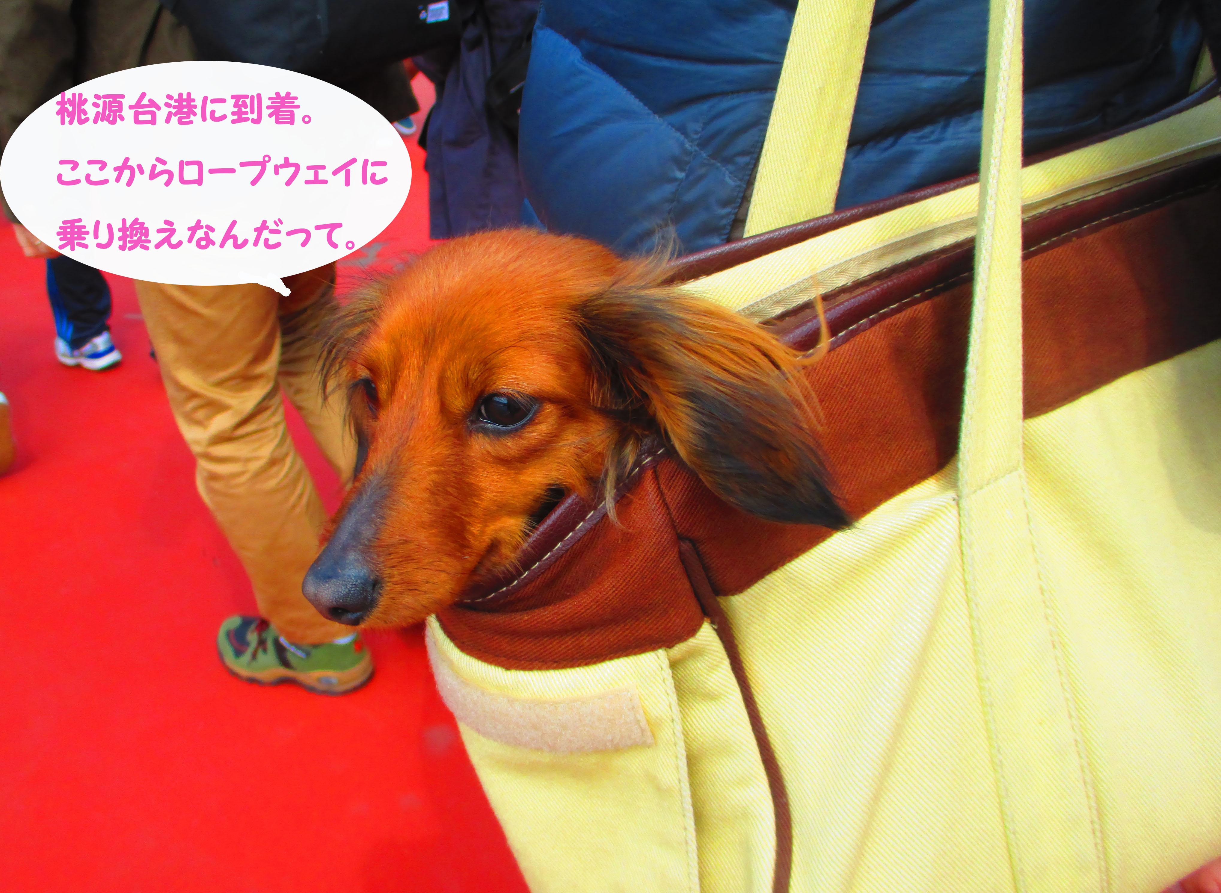 2015-03-hakone65.jpg