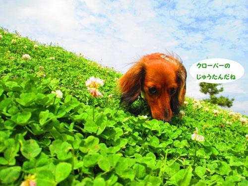 2015-05-sirotume4.jpg
