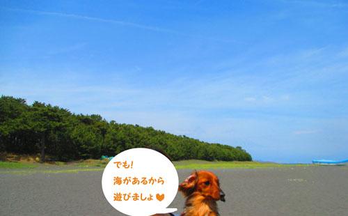 2015-05-sizuoka10.jpg