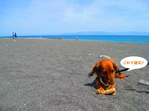 2015-05-sizuoka12_2015061318165027c.jpg