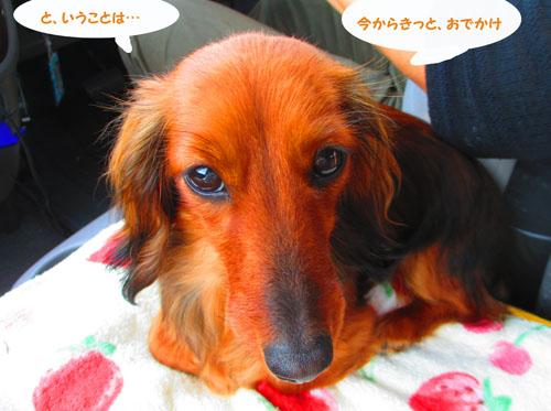 2015-05-sizuoka2.jpg