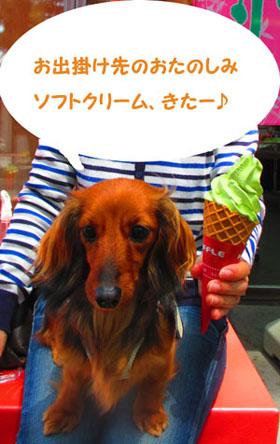 2015-05-sizuoka6.jpg