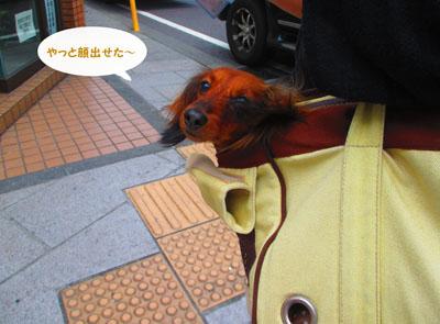 2015-05-yokohama6.jpg
