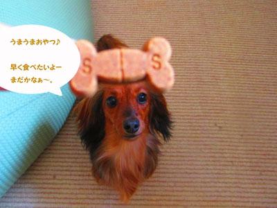 2015-06-chewable3.jpg
