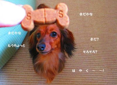 2015-06-chewable4.jpg
