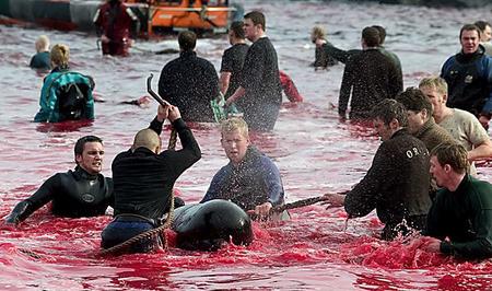 欧州 デンマーク イルカ漁2