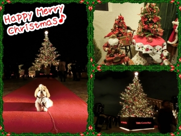 Christmas card (800x600)