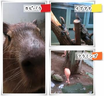 草津6 (800x739)