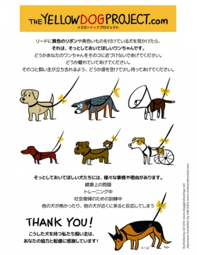 Yellow dog project (500x648)